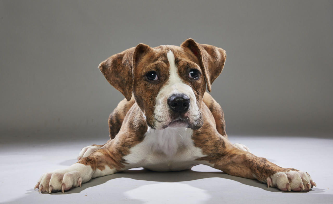 Team: Ruff<br /> From: Villalobos Animal Rescue<br /> (Photo: Animal Planet)