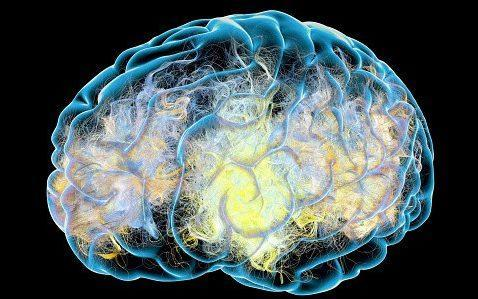 The study found women's brains were younger metabolically than men's - Naeblys