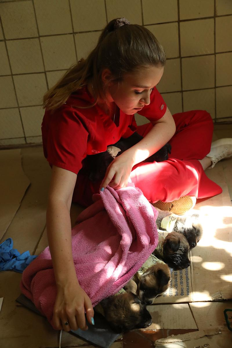 Nastya Grabchuk, a Ukrainian medical student volunteering with the Dogs of Chernobyl initiative, tends to stray puppies recovering from a sedative after surgery and vaccinations at a makeshift veterinary clinic inside the Chernobyl exclusion zone on August 17, 2017.