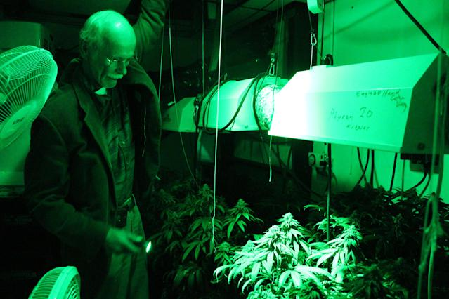 Chuck Ream of Ann Arbor, Mich., growing marijuana in 2014 as a registered medical marijuana patient and a caregiver for four others. (Photo: Emma Fidel/AP)
