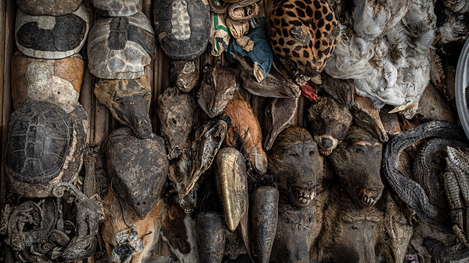 Various species are piled up beside each other for sale. Source: Aaron Gekoski for World Animal Protection