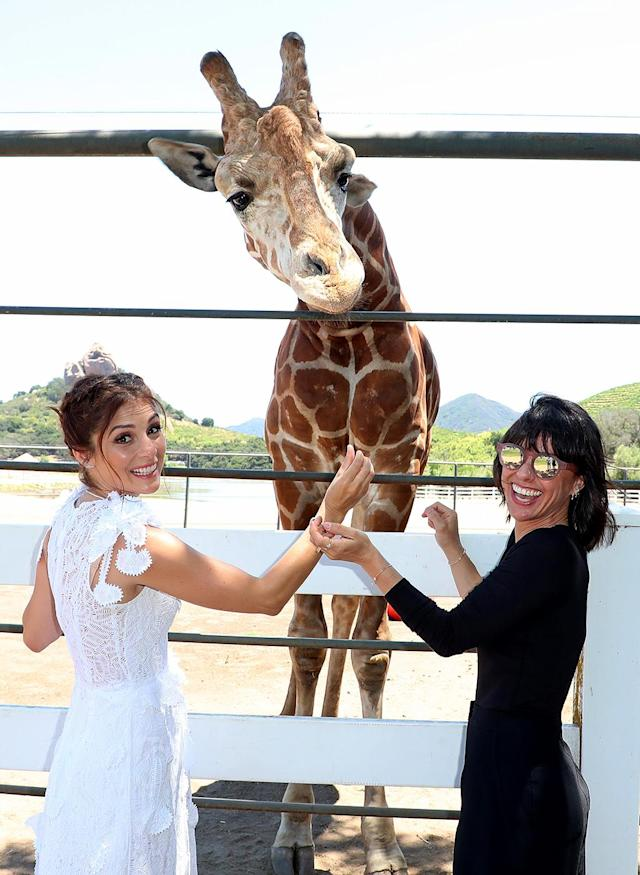 <p>The <i>UnReal</i> actresses made some new animal friends at an event to kick off summer on a wine safari in Malibu, Calif. Unfortunately for fans of the series, all that cuteness came with news that the show won't return until 2018. (Photo: Chelsea Lauren/VAR/REX/Shutterstock) </p>