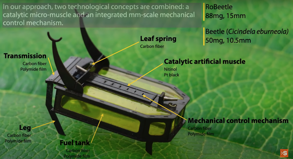 """A marked diagram of a """"Robeetle,"""" which stands atop a fresh green leaf."""