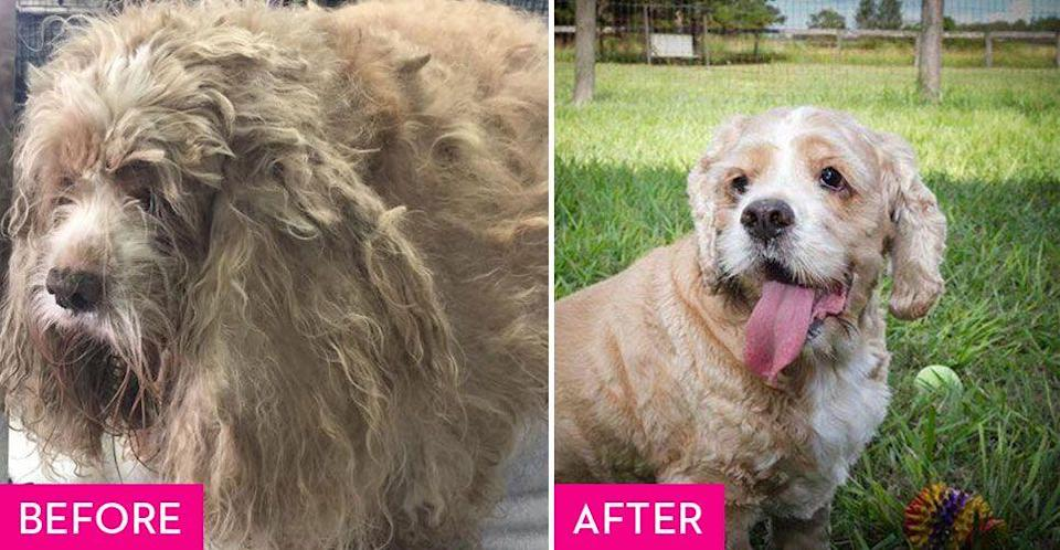 """<p>Stubin was taken to a kill shelter after being dumped in a crate on the side of the road with a cataract in one of his eyes. After being passed up for adoption, <a href=""""http://www.cares4pets.net/"""" rel=""""nofollow noopener"""" target=""""_blank"""" data-ylk=""""slk:CARES"""" class=""""link rapid-noclick-resp"""">CARES</a> took him in and fixed him up for his forever home. Now he goes to sleep every night on a soft bed thanks to his loving family.</p><p><strong>RELATED:</strong> <a href=""""https://www.goodhousekeeping.com/life/pets/g5053/unique-dog-names/"""" rel=""""nofollow noopener"""" target=""""_blank"""" data-ylk=""""slk:100+ Unique Names for Every Kind of Dog"""" class=""""link rapid-noclick-resp"""">100+ Unique Names for Every Kind of Dog</a></p>"""