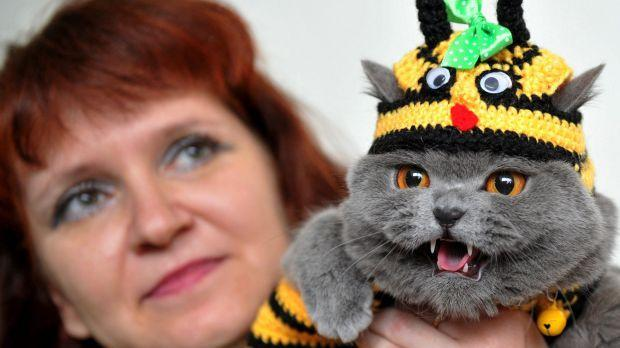 A woman with red hair holds up a grey cat in a bee costume. The cat is not particularly happy.