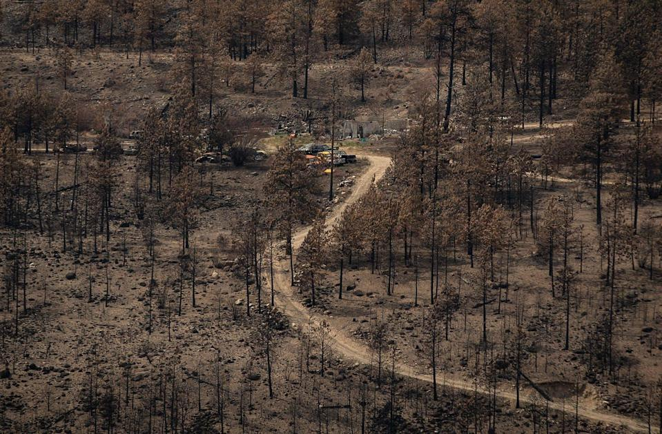 The burnt remnants of a property amid scorched trees.