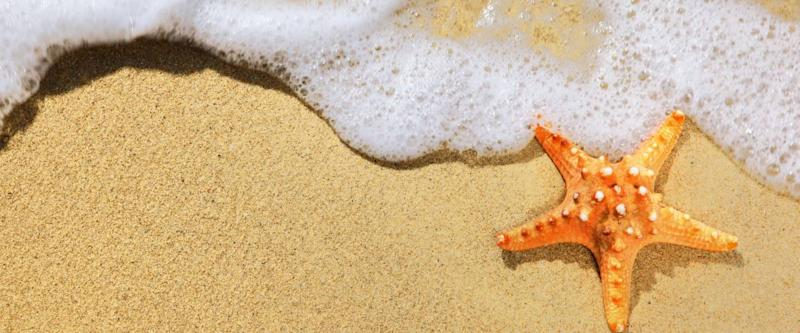 See starfish, rays and other sea creatures in the shallow waters of Puerto Morelos