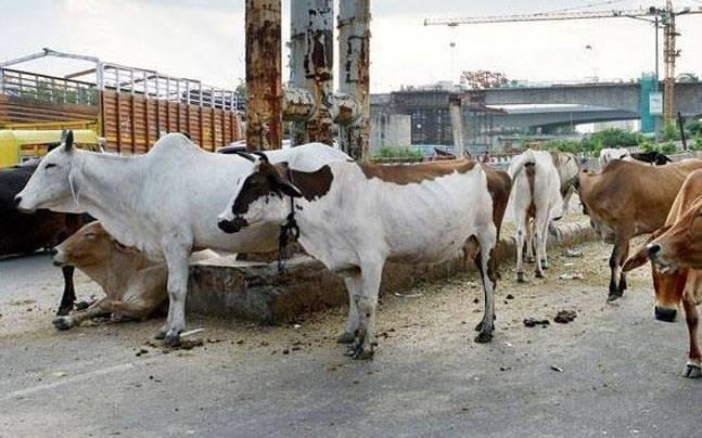 Aadhaar-like UID number for cows to check smuggling, suggests Centre in report to Supreme Court