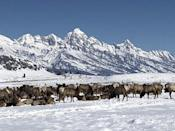 "<p><strong><a href=""https://www.yelp.com/biz/national-elk-refuge-sleigh-rides-jackson"" rel=""nofollow noopener"" target=""_blank"" data-ylk=""slk:National Elk Refuge Sleigh Rides"" class=""link rapid-noclick-resp"">National Elk Refuge Sleigh Rides</a> in Jackson</strong></p><p>""My friend & I enjoyed taking a sleigh ride around the Elk Refuge. We got to see the elk up close, which was really fun! Clint was a great driver who had a lot of knowledge about the elk and horses (our pair was Flint and Lightning, very cute). Would definitely recommend."" - Yelp user <a href=""https://www.yelp.com/user_details?userid=UDg_8ZuT2Z17CGxpm1ZOEA"" rel=""nofollow noopener"" target=""_blank"" data-ylk=""slk:Claire Z."" class=""link rapid-noclick-resp"">Claire Z.</a></p><p>Photo: Yelp/<a href=""https://www.yelp.com/user_details?userid=oyXIV-9GRBBZrFydPCaR2w"" rel=""nofollow noopener"" target=""_blank"" data-ylk=""slk:Candace L."" class=""link rapid-noclick-resp"">Candace L.</a></p>"