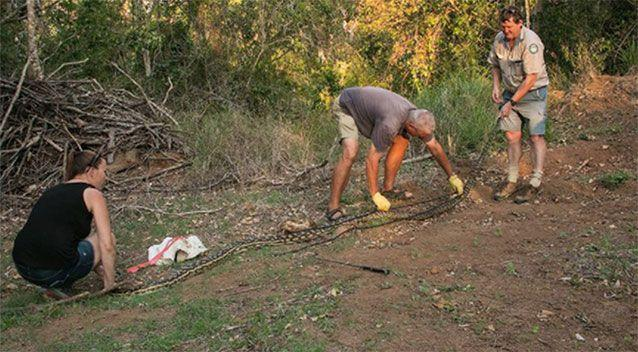 The snake is 4.6metres long. Source: David Barwell