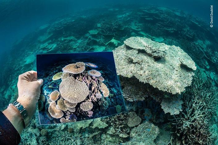 dead coral reef with a hand holding a photo of previously vibrant colorful corals