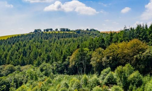 'It's good for the soul': the mini rewilders restoring UK woodland