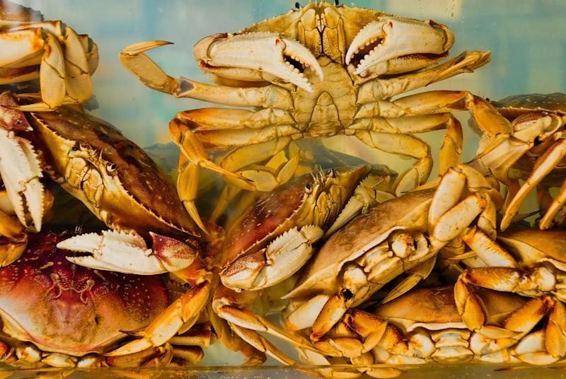 Crabs piled on top of each other in a tank.