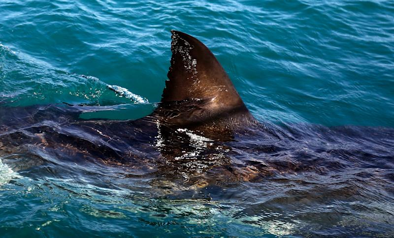 Man loses foot, another seriously injured in shark attack while snorkeling in Australia