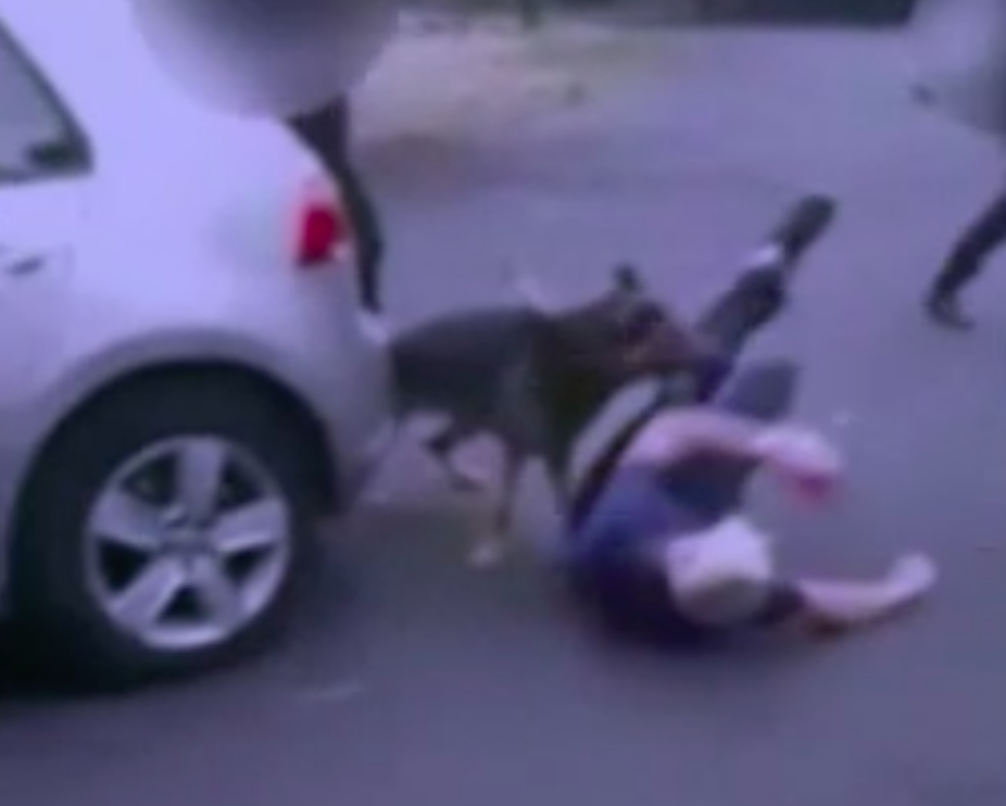 <em>The police dog was seen with its jaws clamped around Andy Cash's leg (Grab)</em>