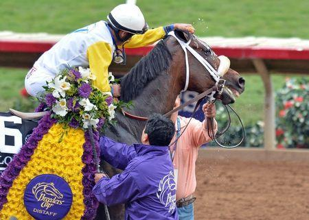 Nov 3, 2017; Del Mar, CA, USA; Forever Unbridled gets sponged off by jockey John Velazquez after a win in the ninth race during the 34th Breeders Cup world championships at Del Mar Thoroughbred Club. Mandatory Credit: Jake Roth-USA TODAY Sports