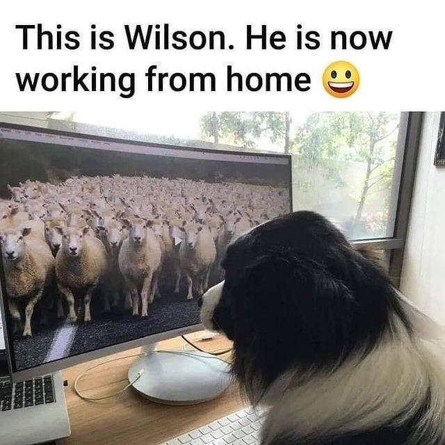 "<p>Good to see other industries extending working from home policies</p><p><a href=""https://www.instagram.com/p/B-aSINknslA/"" rel=""nofollow noopener"" target=""_blank"" data-ylk=""slk:See the original post on Instagram"" class=""link rapid-noclick-resp"">See the original post on Instagram</a></p>"