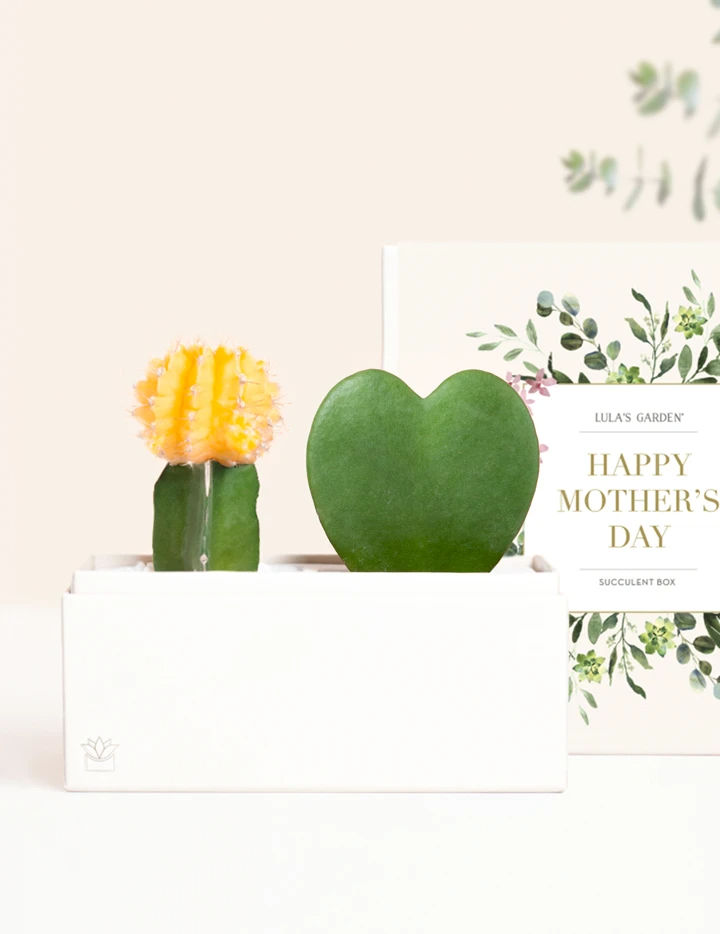 """<h3><h2>Yellow Grafted Cactus </h2></h3> <br><strong>Why She'll Love It</strong><br>If your mom vibes with pretty but a little prickly, then this sunshine-hued cactus garden packaged in a paper-crafted planter box (with special Mother's Day messaging) is on her same wavelength.<br><br><strong>Care</strong><br>Place in bright indirect or direct sunlight and take care to water once a week (or when soil is completely dry).<br><br><em>Shop</em><strong><em> <a href=""""https://www.lulasgarden.com/collections/mothers-day-gifts"""" rel=""""nofollow noopener"""" target=""""_blank"""" data-ylk=""""slk:Lula's Garden"""" class=""""link rapid-noclick-resp"""">Lula's Garden</a></em></strong><br><br><strong>Lula's Garden</strong> Ever Garden, $, available at <a href=""""https://go.skimresources.com/?id=30283X879131&url=https%3A%2F%2Fwww.lulasgarden.com%2Fcollections%2Fmothers-day-gifts%2Fproducts%2Fever-garden-1"""" rel=""""nofollow noopener"""" target=""""_blank"""" data-ylk=""""slk:Lula's Garden"""" class=""""link rapid-noclick-resp"""">Lula's Garden</a>"""