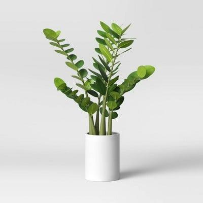 <p>The <span>Project62 Artificial Zamioculcas Zamiifolia Plant in Pot</span> ($30) is a visually striking plant that you'll love putting on display.</p>