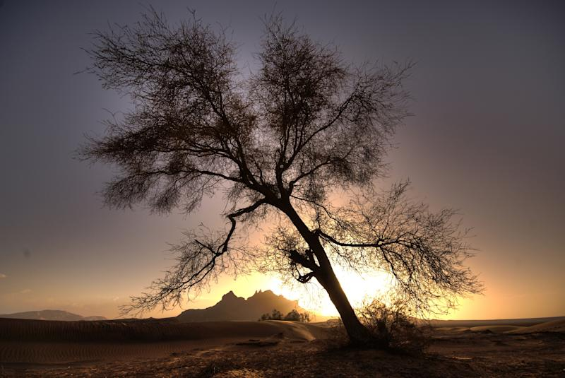 Desert, tree, oasis, Libya, Sahara, Africa, sundown, mountains, Romantical, mood, sand, crooked, leaning, tree, no leaves. (Photo by: Prisma Bildagentur/Universal Images Group via Getty Images)