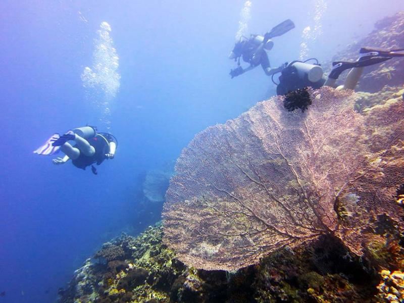 Divers explore the dream sea wall and giant gorgonian fan. Source: Diveplanit