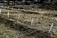 Crosses mark the graves of some 60 unclaimed victims of coronavirus in a cemetery near Milan