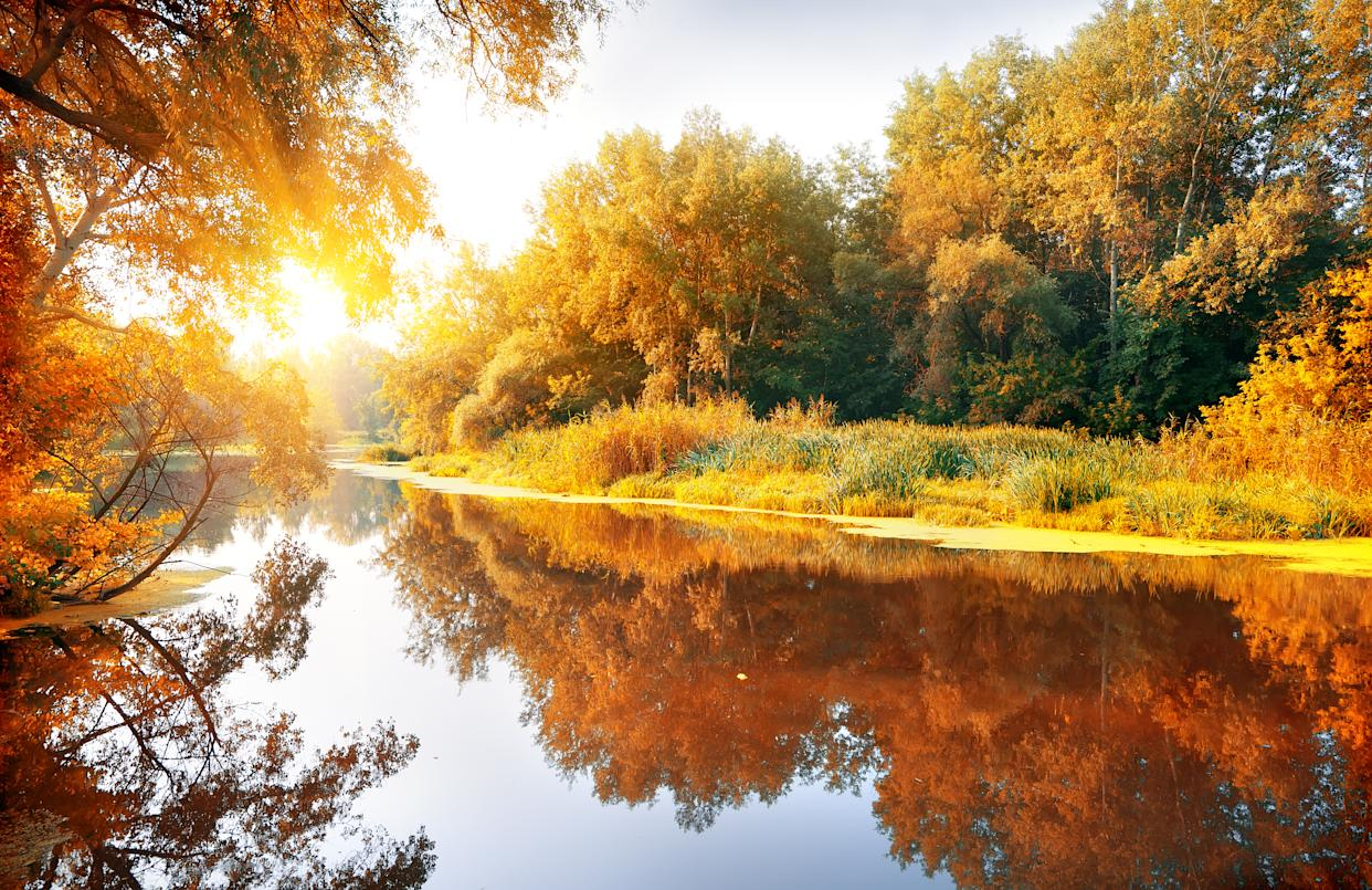 River in a delightful autumn forest at sunny day