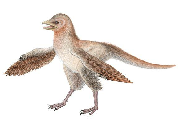 Tiny Feathered Dinosaur Discovered