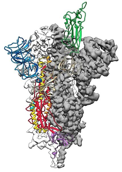 Researchers using powerful computer analysis are seeking to better understand the molecular structure of COVID-19 to help find a treatment