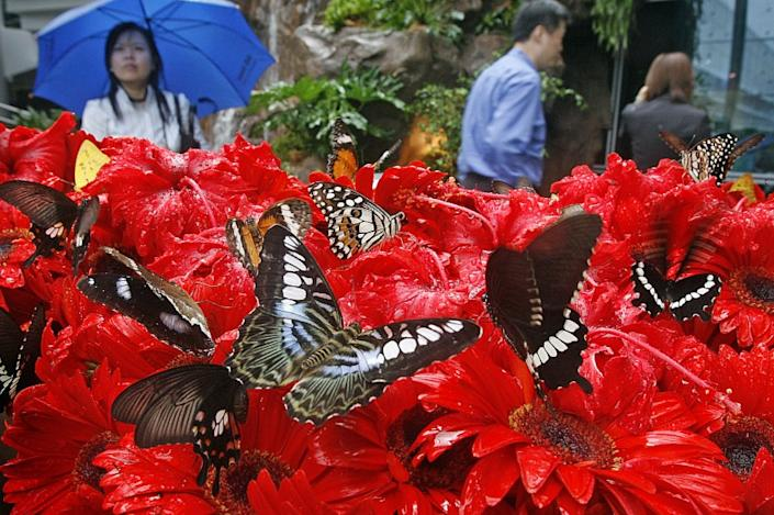 """The butterfly garden at Changi Airport in Singapore. Passenger traffic has plunged 99% at the airport since April as the COVID-19 pandemic brought travel to a halt. <span class=""""copyright"""">(Wong Maye-E / Associated Press)</span>"""