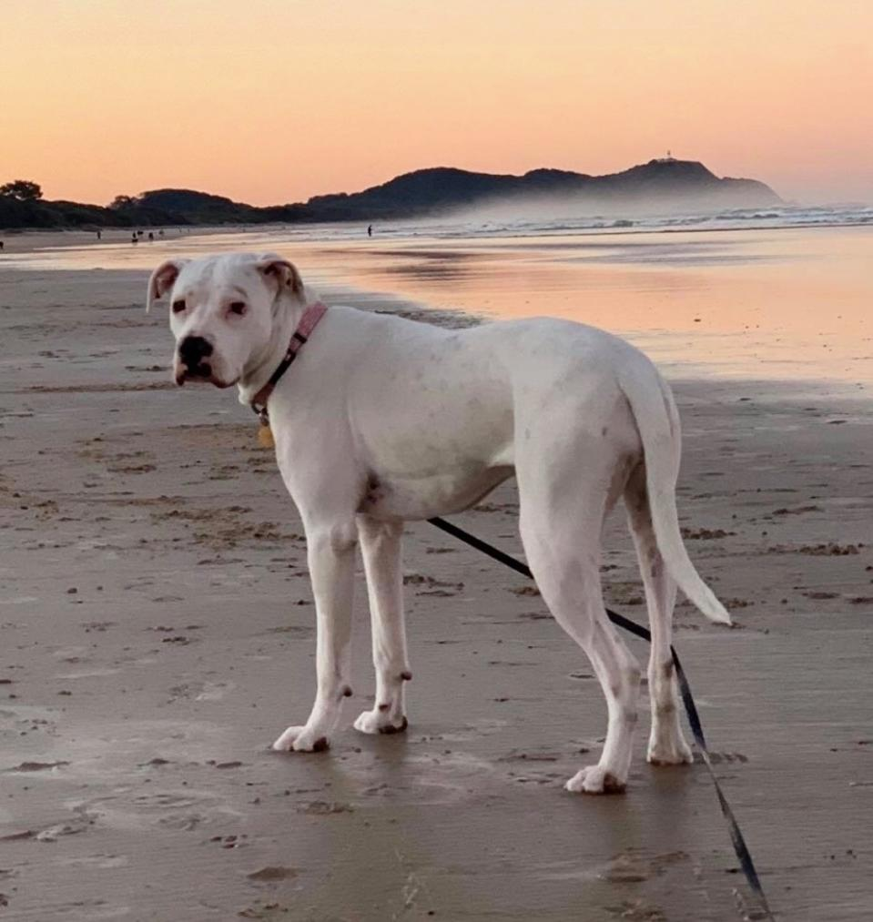 Photo shows rescue dog Storm standing on the beach.