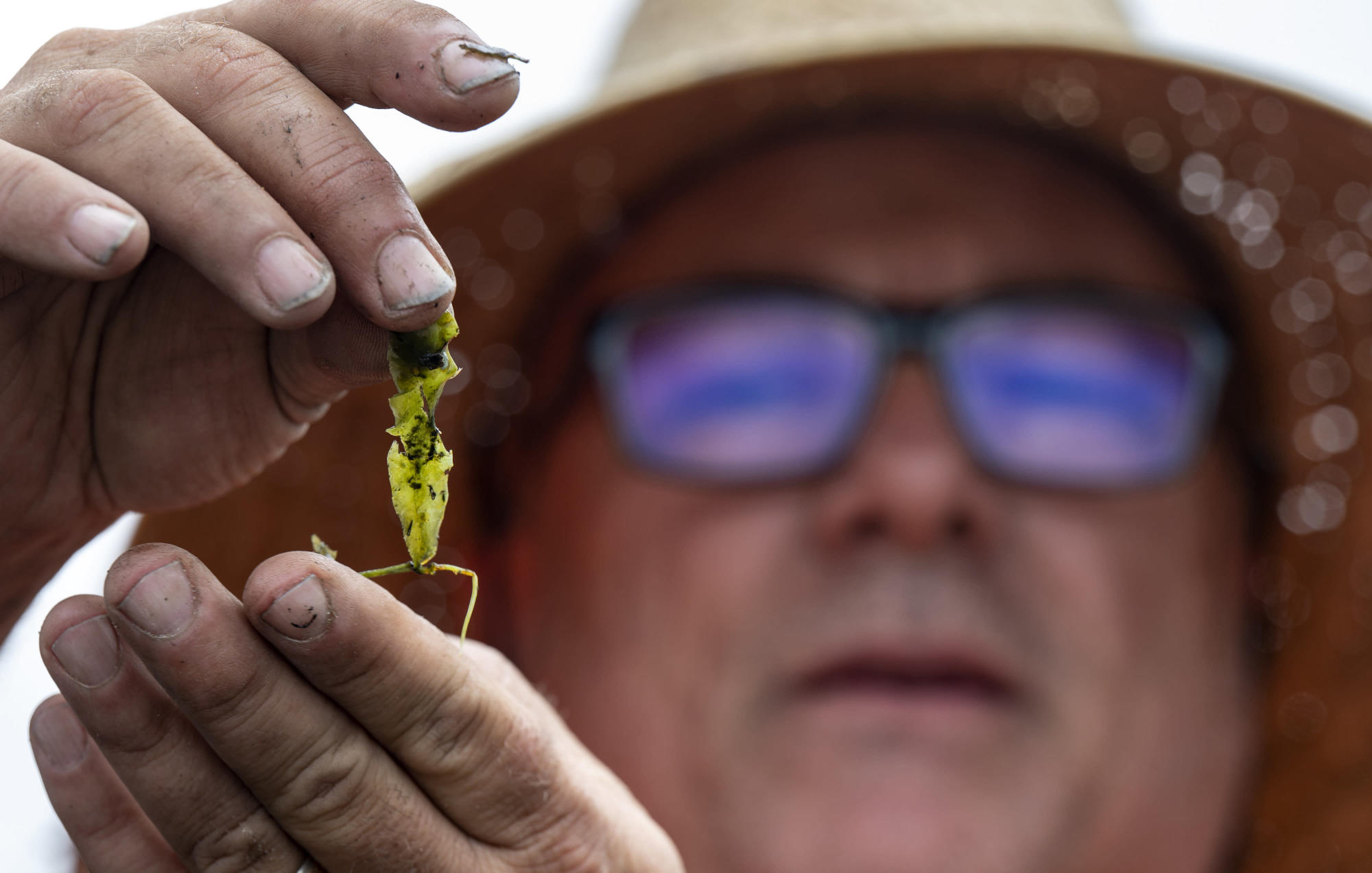 California nixing algae that crowds out food for sea animals