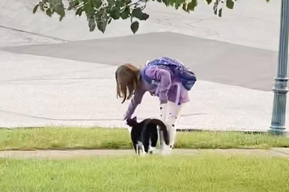 Cat Escorts Girl to Bus Stop and Back