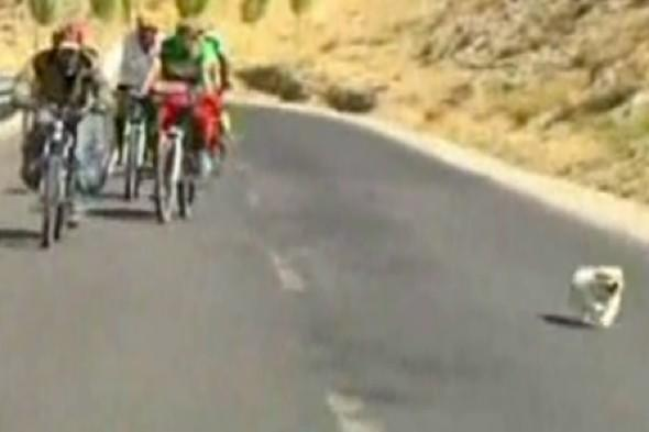 Video: Stray dog completes 1700km cycling race in China