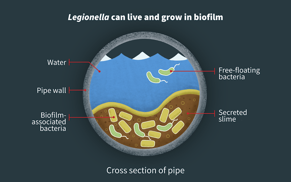 A biofilm cross-section of Legionella in a water pipe.