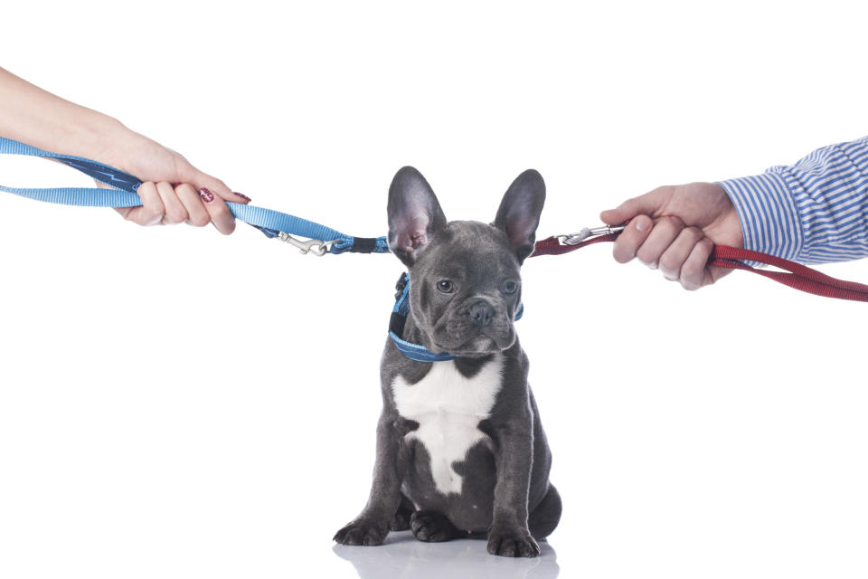 Who gets custody of the dog? (Getty Images)