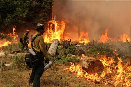 Firefighters burn a fire break at the Rim Fire in Yosemite National Park in this September 1, 2013 handout photo. REUTERS/Mike McMillan/USFS/Handout