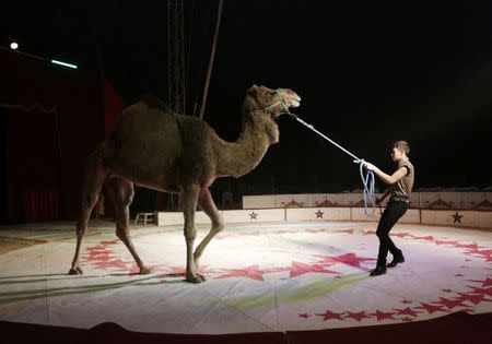 A trainer moves a dromedary during a show at the Cedeno Hermanos Circus in Mexico City March 9, 2015. REUTERS/Henry Romero