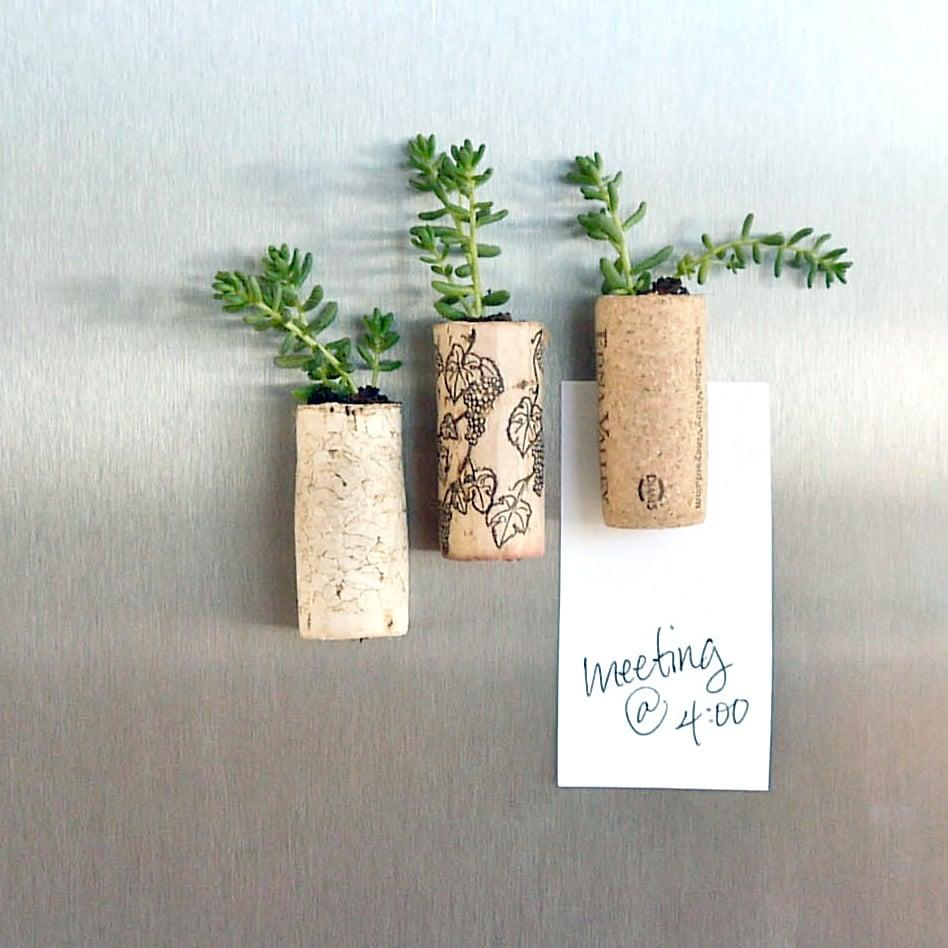"<p>Hollow out corks to make cute planters. Get the <a class=""sugar-inline-link ga-track"" title=""Latest photos and news for DIY"" href=""https://www.popsugar.com/DIY"" target=""_blank"" data-ga-category=""Related"" data-ga-label=""https://www.popsugar.com/DIY"" data-ga-action=""&lt;-related-&gt; Links"">DIY</a> for these <a href=""https://www.popsugar.com/smart-living/Succulent-Wine-Corks-32808422"" class=""ga-track"" data-ga-category=""Related"" data-ga-label=""https://www.popsugar.com/smart-living/Succulent-Wine-Corks-32808422"" data-ga-action=""In-Line Links"">succulent wine corks here</a> - they're even magnets! </p>"