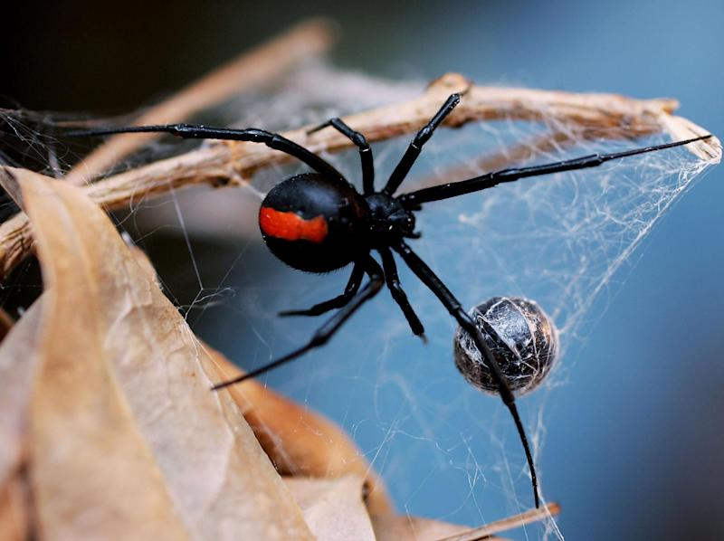 The report looked at the dietary habits of 65 spider types: Getty Images