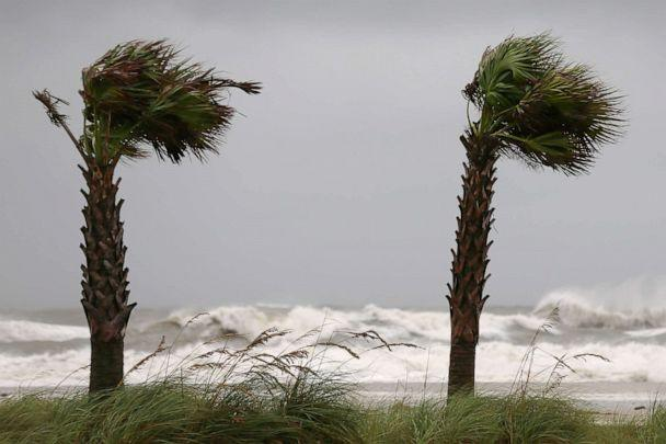 PHOTO: Palm trees sway in the wind as Hurricane Sally approaches in Gulf Shores, Alabama, Sept. 15, 2020. (Jonathan Bachman/Reuters)