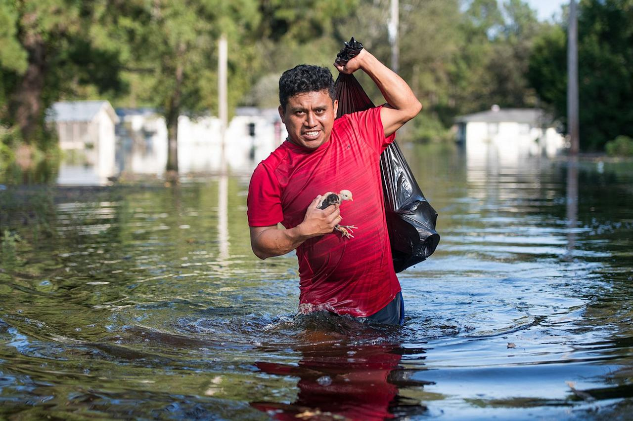 "<p>A volunteer named Luis Gomez rescues baby chicks from the floodwaters <a rel=""nofollow"" href=""https://www.npr.org/2018/09/18/649238096/how-to-help-those-affected-by-hurricane-florence"">after Hurricane Florence</a> in Longs, South Carolina on September 21, 2018. </p>"