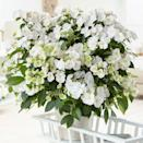 """<p>These weeping white flowers are ideal for creating abundant hanging baskets or adding into mixed borders.</p><p><a class=""""link rapid-noclick-resp"""" href=""""https://www.crocus.co.uk/plants/_/hydrangea-runaway-bride-snow-white-ushyd0405-pbr/classid.2000027201/"""" rel=""""nofollow noopener"""" target=""""_blank"""" data-ylk=""""slk:BUY NOW"""">BUY NOW</a> <strong>from £24.99, Crocus</strong></p>"""