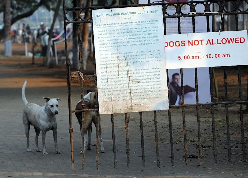 Stray dogs are seen inside the gates of The Turf Club in Mumbai on February 1, 2012 (AFP Photo/Indranil Mukherjee)