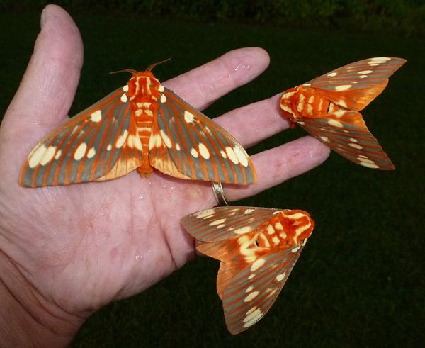 7 Things You Don't Know About Moths, But Should