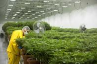 Some opponents argue that North Macedonian society is not ready for such a change as cannabis legalisation
