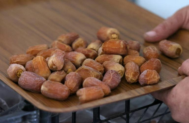 Dates harvested from 'Hannah', the first female date palm germinated from 2,000-year-old seeds discovered in the Judean desert (AFP/Emmanuel DUNAND)