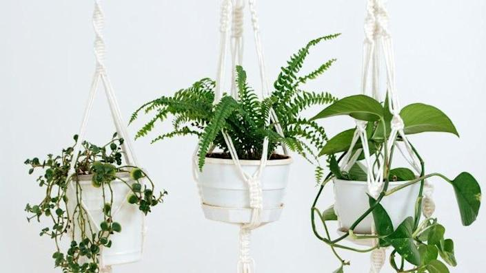 Learn to weave and knot a plant hanger.