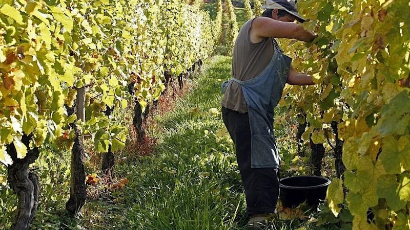 French prime minister announces extra aid package to struggling wine-makers
