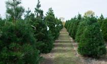 """<p><strong>Owasso, Oklahoma </strong>(Starting November 17)</p><p>Once you've determined which tree you're taking home, celebrate your success with a free cup of hot apple cider in the <strong><a href=""""http://www.owassotreefarm.com/"""" rel=""""nofollow noopener"""" target=""""_blank"""" data-ylk=""""slk:Owasso Christmas Tree & Berry Farm"""" class=""""link rapid-noclick-resp"""">Owasso Christmas Tree & Berry Farm</a></strong> gift shop. With plenty of Christmas decor inside, you'll definitely be tempted to bring something home.</p>"""